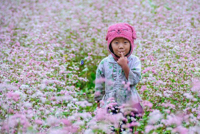 kinh nghiem du lich mua hoa tam giac mach ha giang kpds 6