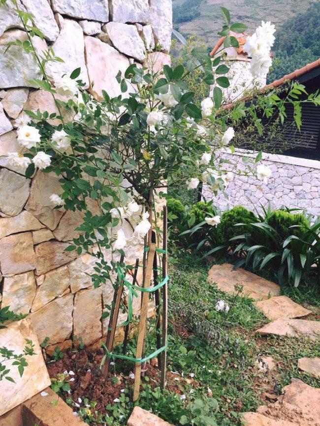 sapa jade hill resort 10