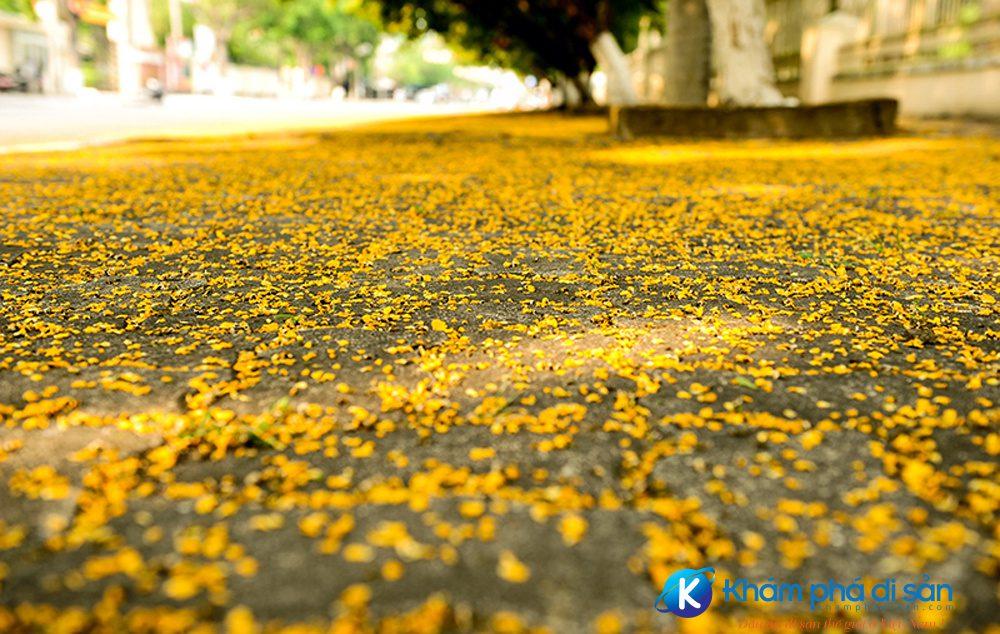 nhung con duong hoa sua ruc vang o quang nam khamphadisan 3