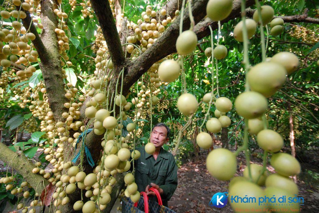 can tho nhung diem du lich khong the bo qua khamphadisan 6