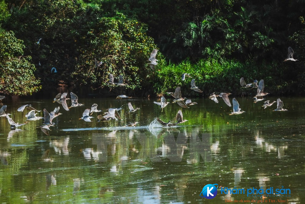 vuon chim bac lieu khamphadisan 5