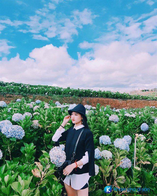 Những địa điểm ngắm hoa ở Đà Lạt