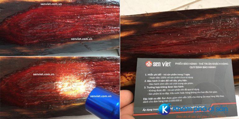 Khúc gỗ tử đàn đỏ lá nhỏ Ấn Độ quý hiếm hiện đang được trưng bày tại VPGD của SEN VIỆT