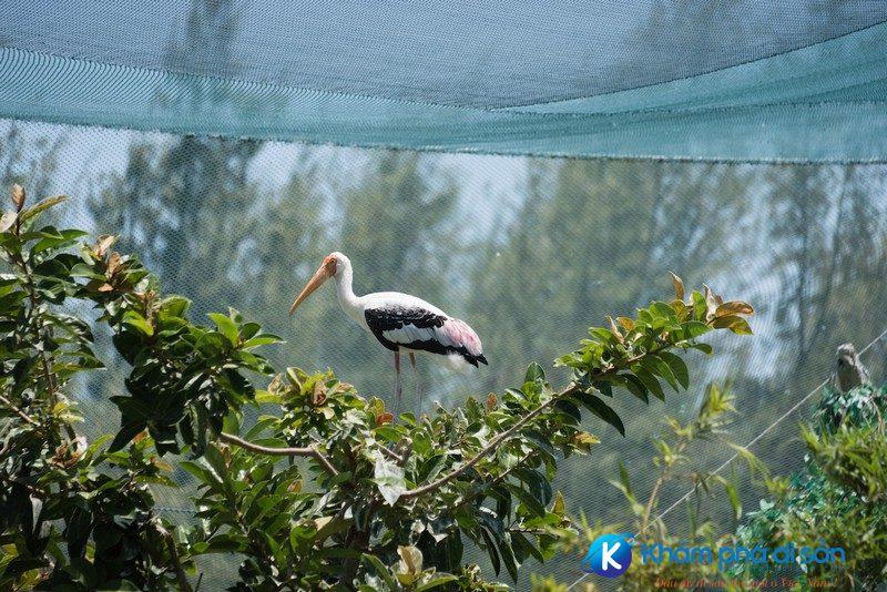 Vườn chim FLC Zoo Safari Park