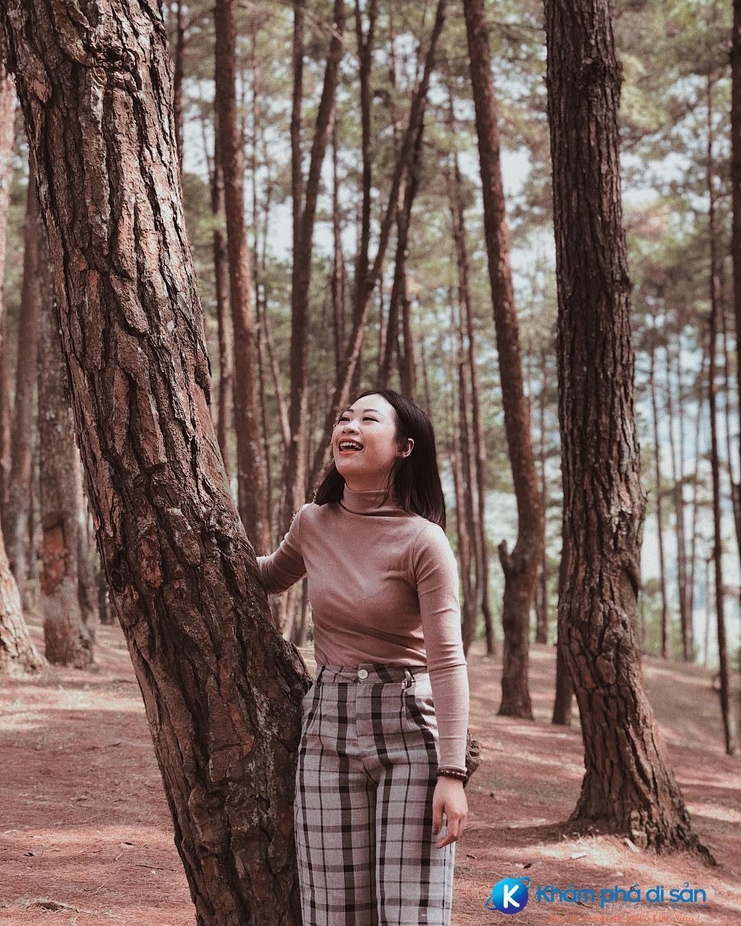 rừng thông yên minh