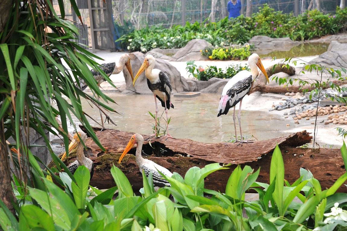 safari phu quoc 2