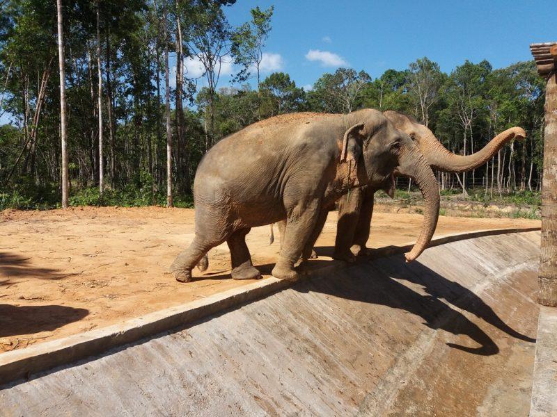 safari phu quoc e1536372049734