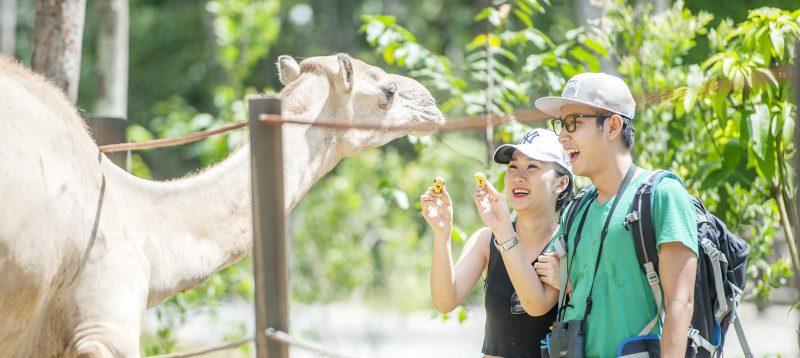vinpearl safari phu quoc 14 e1536373299863