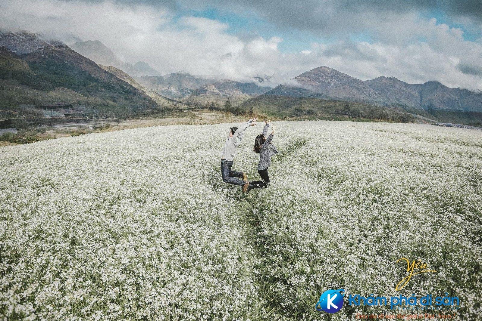 mộc châu mùa hoa cải trắng