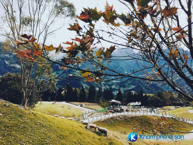 Mùa thu trên Cingjing Farm