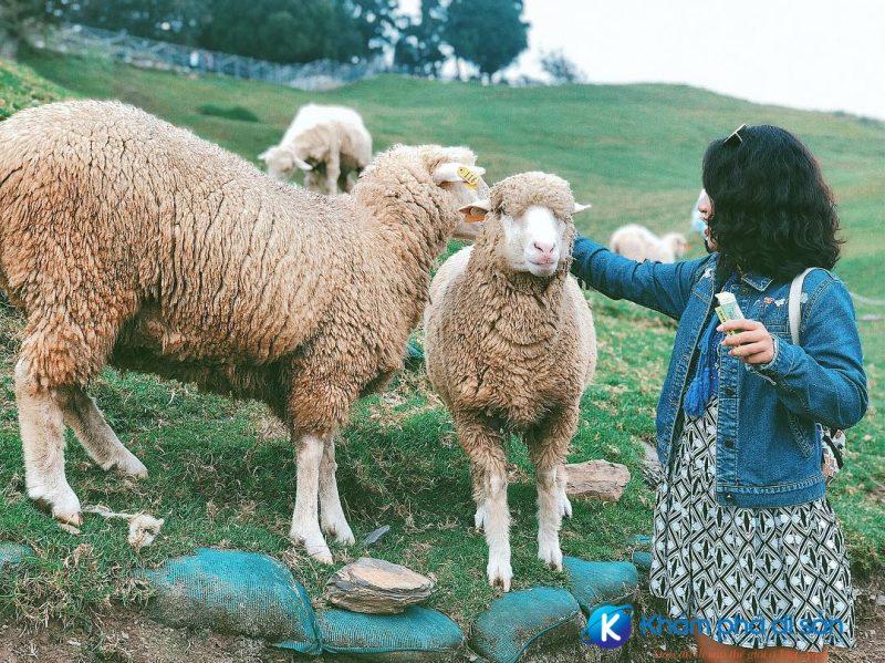 Cingjing Farm