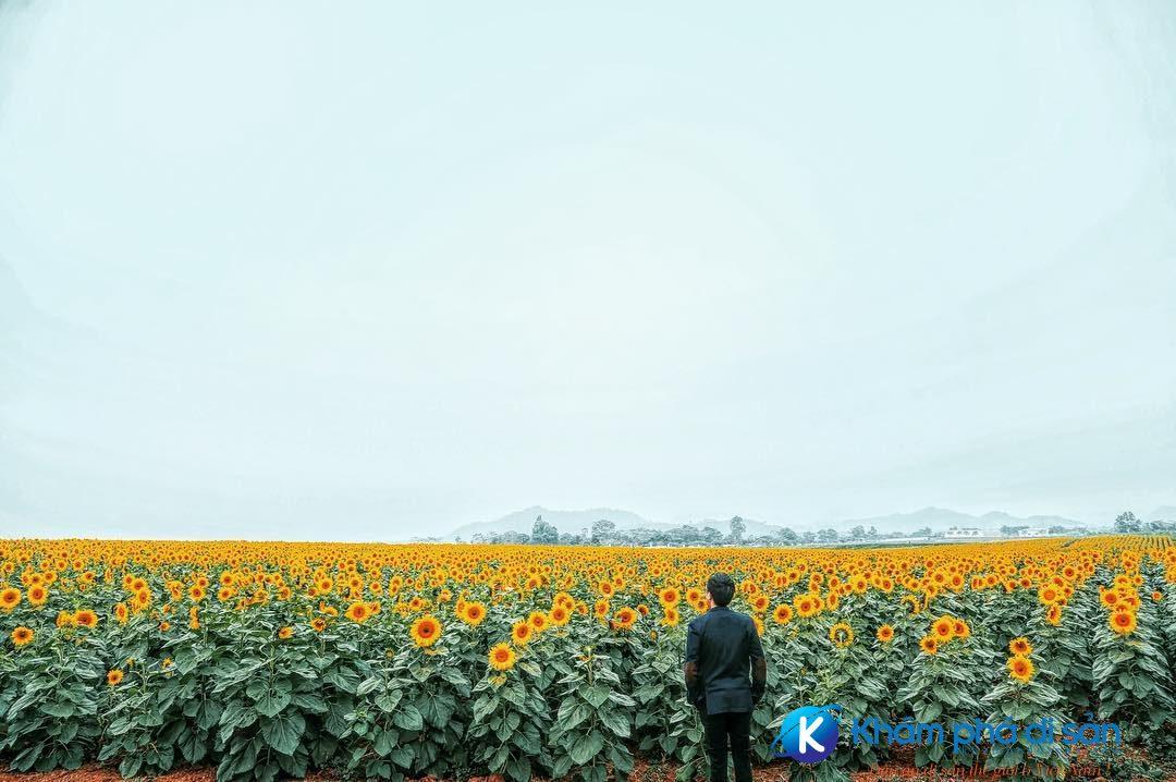 cánh đồng hoa tuyệt đẹp tại nghệ an