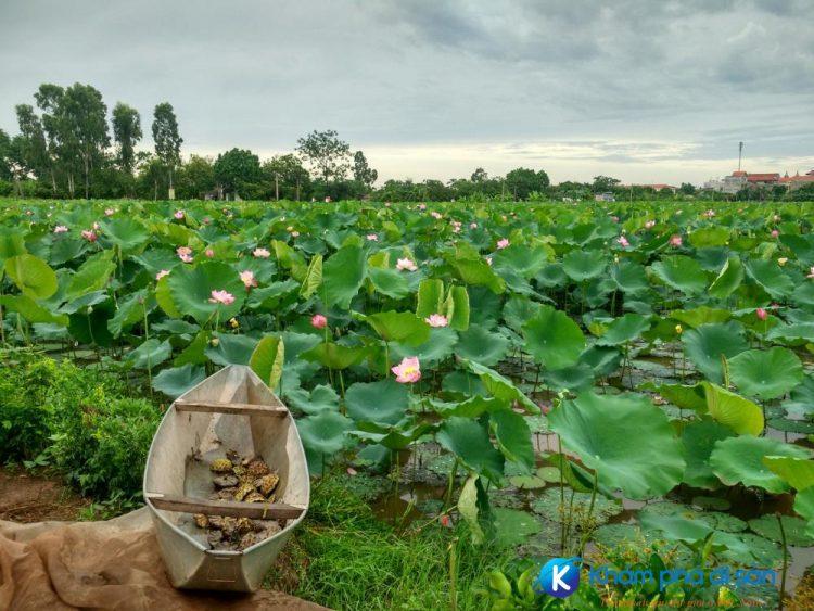 Hà Nam Tintuc.vn  e1558862956569