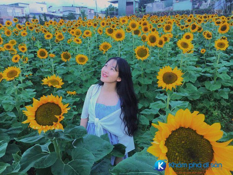 Cánh đồng hoa hướng dương Blog Traveloka e1559747112118