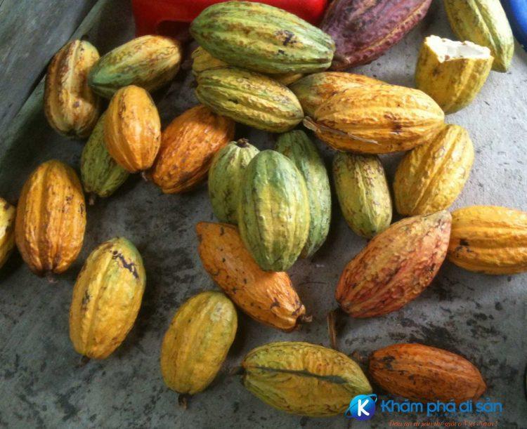 Cacao Dulichvietnam optimized e1560311799770