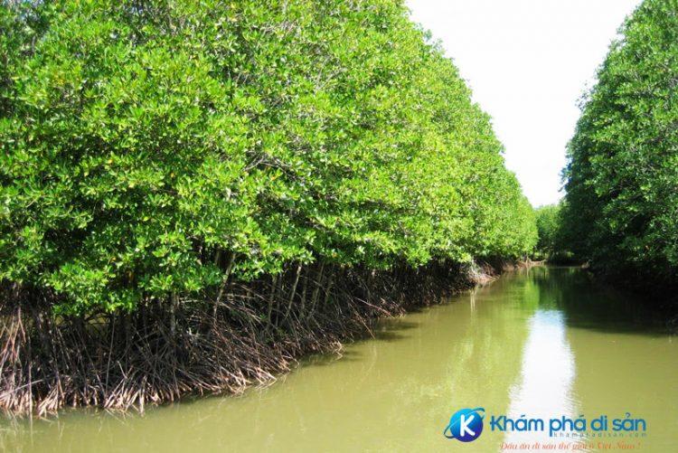 Khu du lịch sinh thái rừng đước UBND tỉnh Trà Vinh e1560159727841