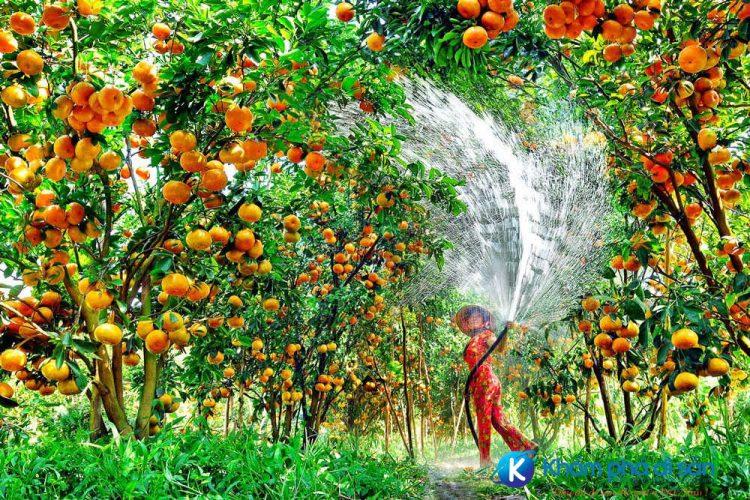 VườntráicâyMỹKhánh Chudu24 optimized e1560311103311
